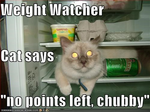 "Weight Watcher  Cat says ""no points left, chubby"""