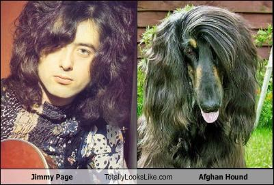 Jimmy Page Totally Looks Like Afghan Hound