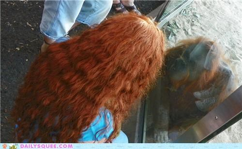 acting like animals,color,girl,hair,human,illusion,mirror,orangutan,question,resemblance,window