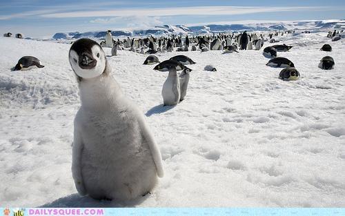 baby,chick,crane,craning,Hall of Fame,neck,penguin,portmanteau,pun,stretching