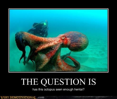 THE QUESTION IS