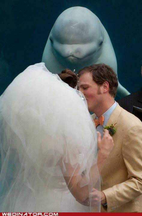 beluga whale,bride,funny wedding photos,groom,whales