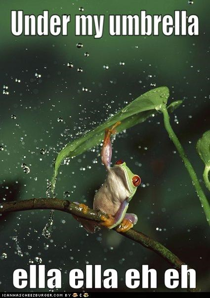 animals,frogs,I Can Has Cheezburger,lyrics,rain,rihanna,Songs,umbrella,water