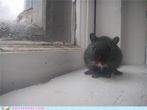 adorable,commentary,confused,double stuffed,flower pot,oreo,pun,rat,reader squees,unable
