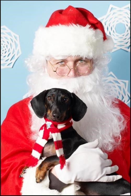 Happy Holidays to You and Your Furry Companions. Actually, Just You.