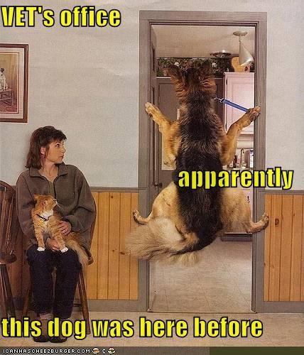 do not want,german shepherd,i refuse,vet,veterinarian,vets-office