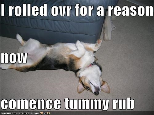 I rolled ovr for a reason now comence tummy rub