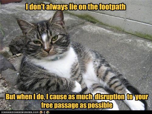 annoying,block,caption,captioned,cat,disruption,footpath,free,lie,passage,possible,the most interesting man in the world