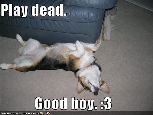 Play dead.   Good boy. :3