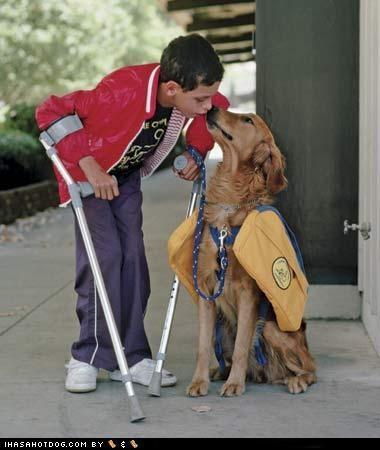 child,friends,goggie ob teh week,golden retriever,helping,love,service and assistance,service and assistance dogs,service dogs