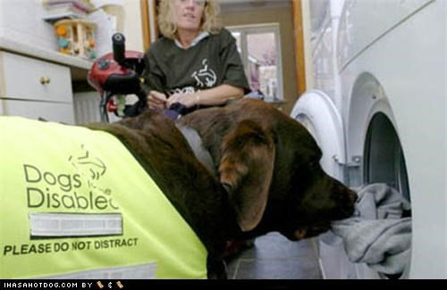 Goggie ob teh Week - Service & Assistance: Did You Switch to Tide?