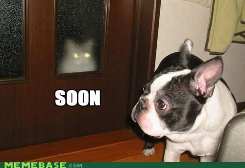 ONCE I GET A CAT DOOR