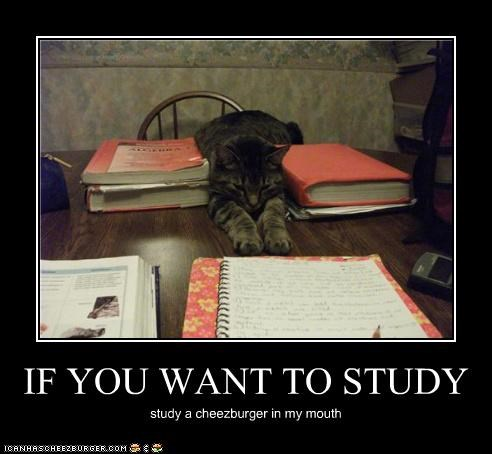 IF YOU WANT TO STUDY