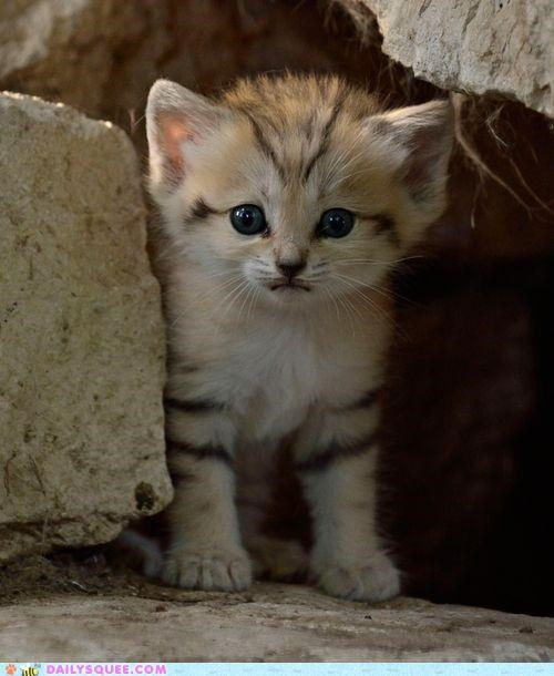 Rare Sand Kitten Born in Tel Aviv