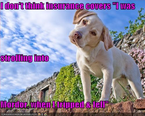 insurance,labrador retriever,Lord of the Rings,mixed breed,mordor,one does not simply walk into mordor,oops,ouch,strolling,what happened