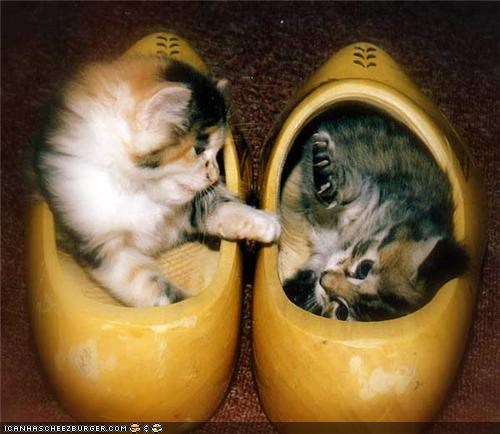 clogs,cyoot kitteh of teh day,dutch,shoes,two cats