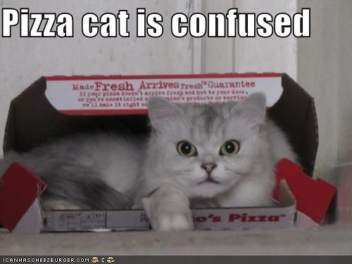 Pizza cat is confused