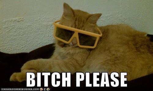 animals,Cats,cool,I Can Has Cheezburger,please,sunglasses