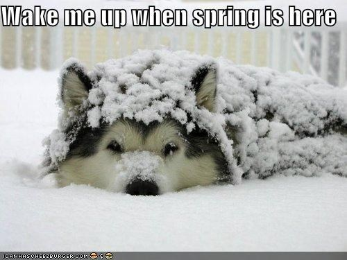 Wake me up when spring is here