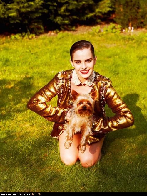 actress,actresses,celeb,classy,emma watson,fabulous,fashion,yorkie,yorkshire terrier