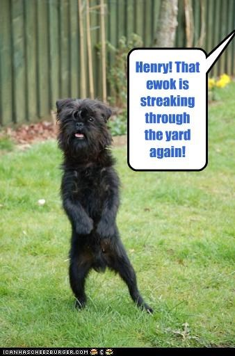 Henry! That ewok is streaking through the yard again!