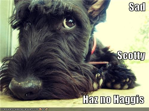 haggis,people food,Sad,scottie dog,scottish terrier,scotty