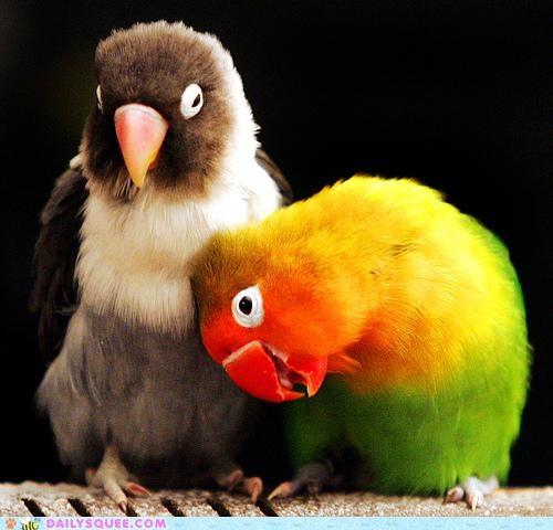 Acting Like Animals: The Love Birds