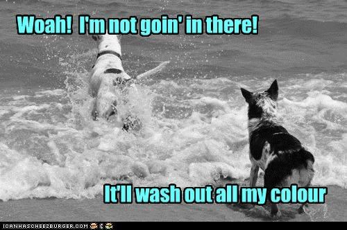 color,do not want,mixed breed,ocean,playing,skeptical,swimming,uh oh,wash,water,whatbreed,worried