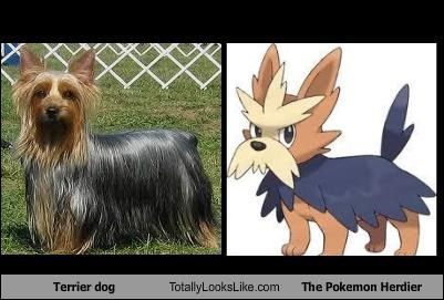 Terrier Dog Totally Looks Like The Pokemon Herdier