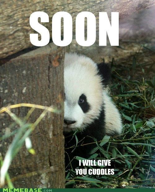 animemes,best,cuddle,cute,grass,panda,snuggle,SOON