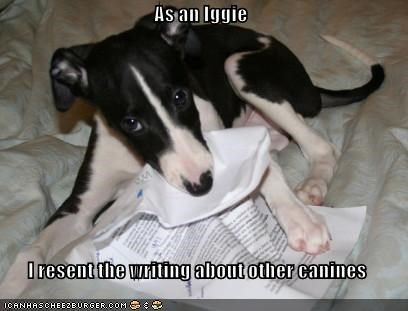As an Iggie  I resent the writing about other canines