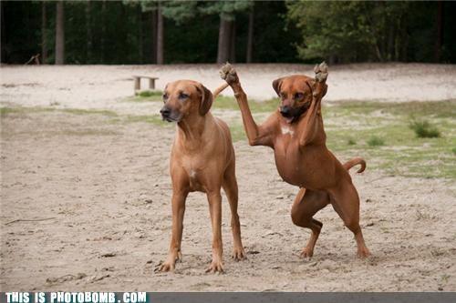 Dogs Pounce?