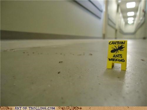 ants,caution,cute,IRL,sign,working