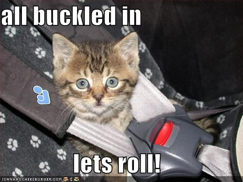 all buckled in  lets roll!