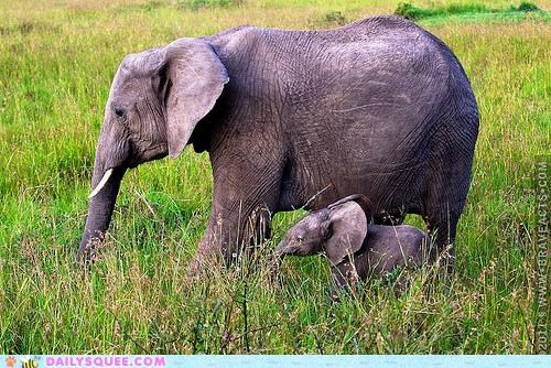 baby,beauty,child,elephant,elephants,life,parent,reminder,touching