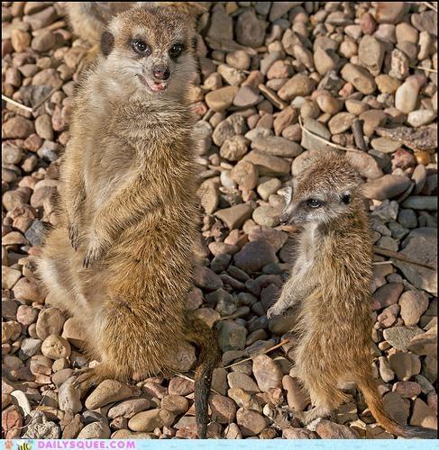 child,Father,instructions,meerkat,Meerkats,parent,Photo,posing,request,smile,son