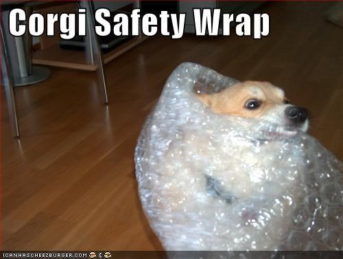 bite,bubble wrap,corgi,dont-hurt-yourself,playing,safety,safety wrap