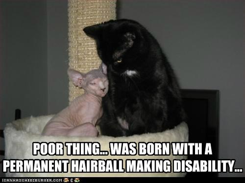 POOR THING... WAS BORN WITH A PERMANENT HAIRBALL MAKING DISABILITY...