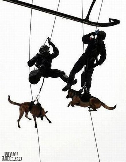 Rappelling Dogs WIN