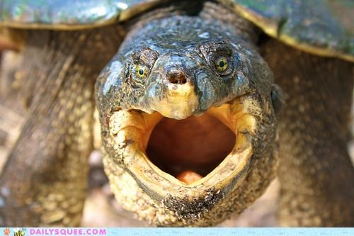 Acting Like Animals: CANNOT UNSEA TURTLE.