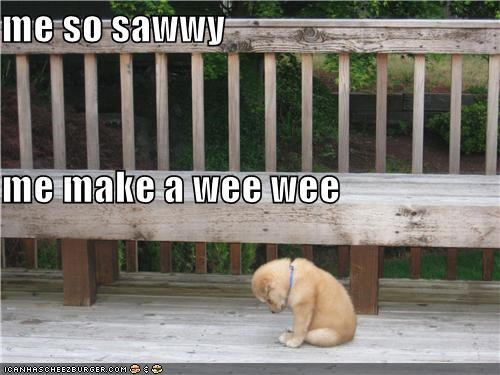 me so sawwy me make a wee wee
