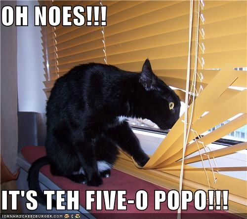 animals,blinds,Cats,I Can Has Cheezburger,oh noes,police,windows