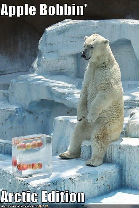Apple Bobbin'  Arctic Edition