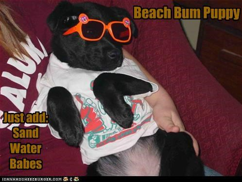 Beach Bum Puppy