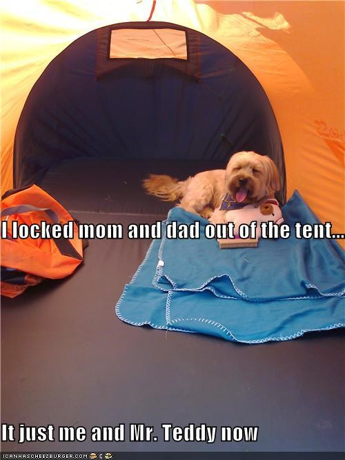 I locked mom and dad out of the tent.... It just me and Mr. Teddy now