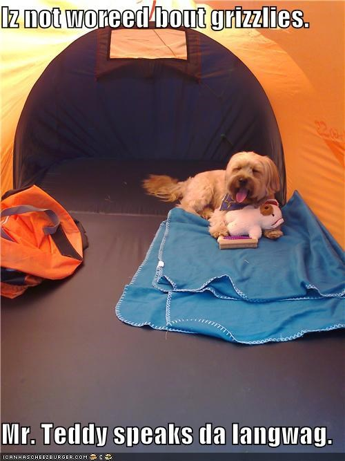 camping,chill out bro,grizzly bears,language,not worried,teddy,teddy bear,tent,whatbreed