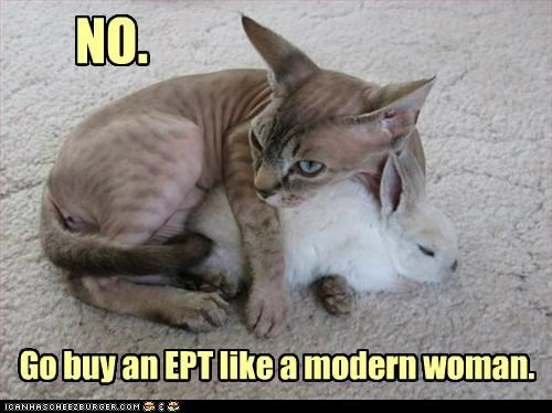 animals,bunnies,Cats,EPT,I Can Has Cheezburger,Interspecies Love,pregnancy,rabbits