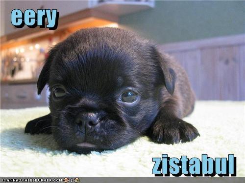 awww,cute,irresistible,Precious,puppy,sweet,whatbreed