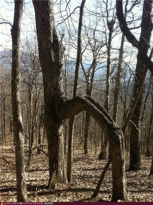 Creepy Tree Root will take your soul