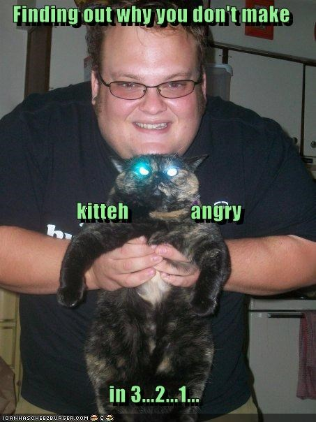 Finding out why you don't make     kitteh               angry in 3...2...1...